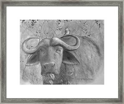 Water Buffalo Framed Print by Jim Hubbard