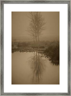 Water Buffalo Morning Fog Framed Print by Frank Feliciano