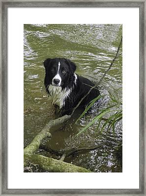 Water Clem Framed Print by Daniel Kasztelan