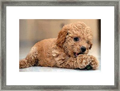 Water Color Poodle Framed Print by Shere Crossman