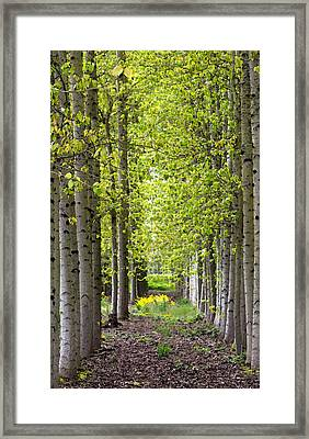 Water Color Trees 2 Framed Print by Rebecca Cozart