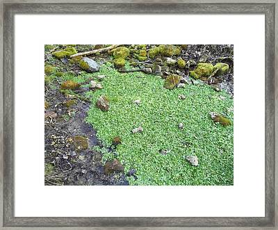 Water Crest Anyone Framed Print