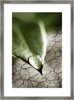 Water Drop On Green Leaf Framed Print