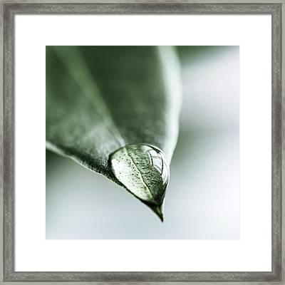 Water Drop On Leaf Framed Print by Elena Elisseeva