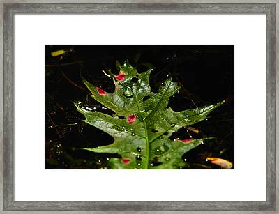 Water Drop On Leaf Framed Print by Valarie Davis
