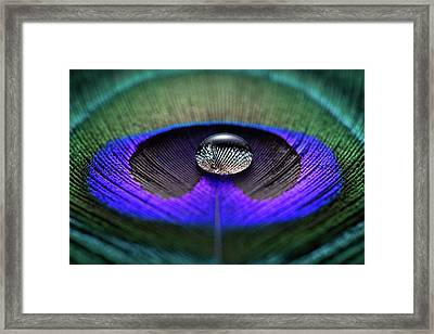 Water Drop On Peacock Feather Framed Print by Miragec
