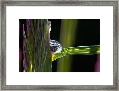 Water Drop Sparkle Framed Print