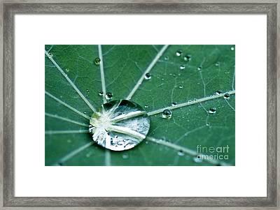 Water Droplet On A Lotus Leaf Framed Print by Heiko Koehrer-Wagner
