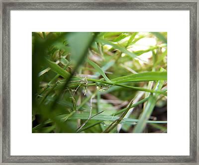 Water Droplet On Grass Blade Framed Print by Corinne Elizabeth Cowherd