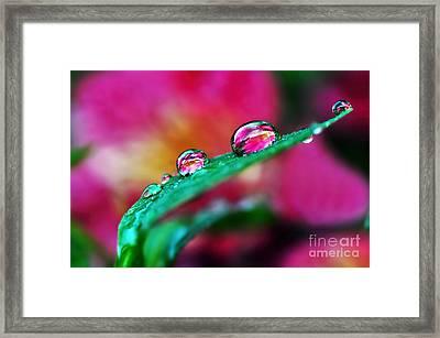 Water Droplets In Magenta Framed Print by Kaye Menner