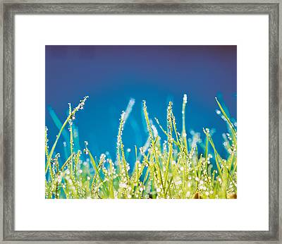 Water Droplets On Blades Of Grass Framed Print