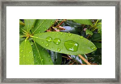 Water Droplets On Leaf Framed Print