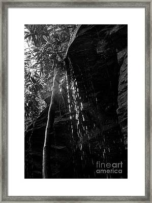 Water Drops After Storm Framed Print by Dan Friend