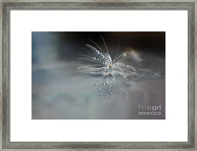 Water Drops Framed Print by Eden Baed