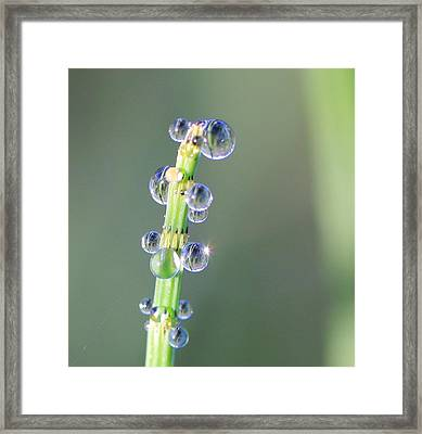 Water Drops Framed Print by Lepercq Veronique