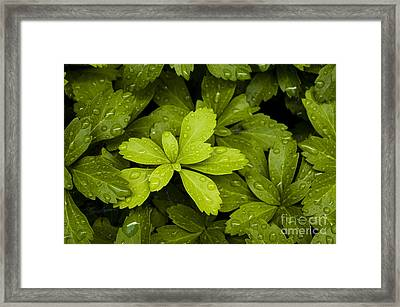 Water Drops New Growth Framed Print
