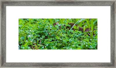 Water Drops On The  Grass 0048 Framed Print by Terrence Downing