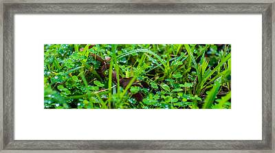Water Drops On The  Grass 0052 Framed Print by Terrence Downing