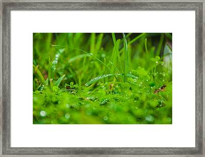 Water Drops On The  Grass 0084 Framed Print by Terrence Downing
