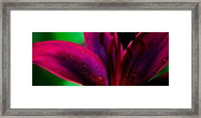 Water-drops On The Petal Framed Print by Shelby  Young