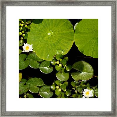 Water Drops Bristol Rhode Island Framed Print by Tom Prendergast