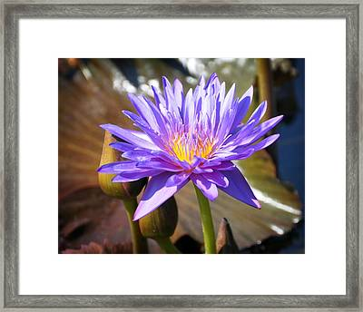 Framed Print featuring the photograph Water Flower 1004d by Marty Koch