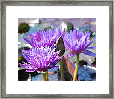 Framed Print featuring the photograph Water Flower 1006 by Marty Koch
