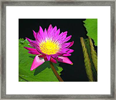Framed Print featuring the photograph Water Flower 10089 by Marty Koch
