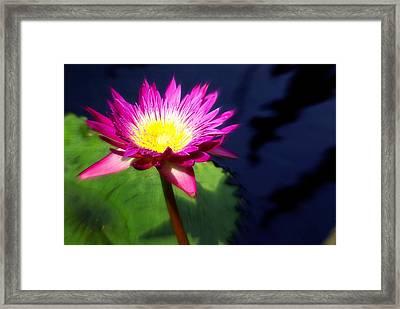 Water Flower Framed Print by Marty Koch