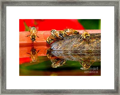 Water For Honey Bees 2 Framed Print