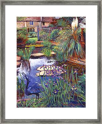 Water Garden Framed Print by David Lloyd Glover