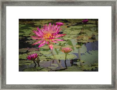 Water Garden Dream Framed Print