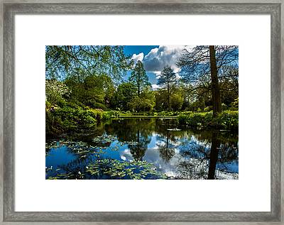 Water Garden Framed Print