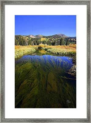 Water Garden Framed Print by Rick Lewis