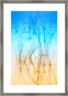 Water Grass - Outer Banks Framed Print by Dan Carmichael