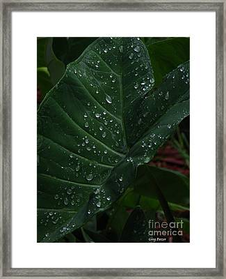 Water In My Ear Framed Print by Greg Patzer