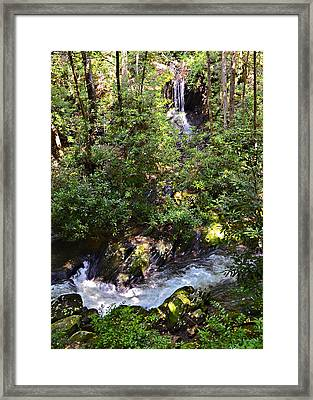 Water In The Forest Framed Print