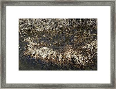 Dried Grass In The Water Framed Print