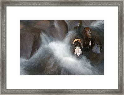 Water Leaf Framed Print by Mark Russell