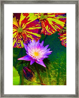 Water Lilies Framed Print by Amy Vangsgard