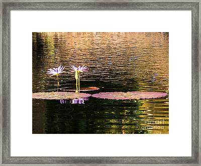 Water Lilies And Bubbles Framed Print by Zina Stromberg