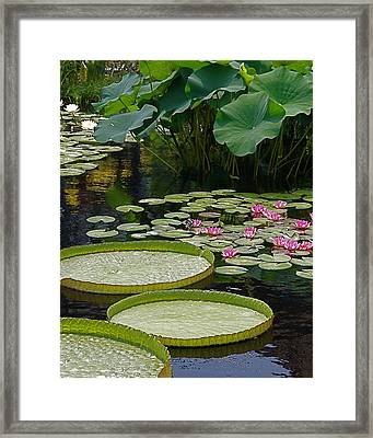 Framed Print featuring the photograph Water Lilies And Platters And Lotus Leaves by Byron Varvarigos