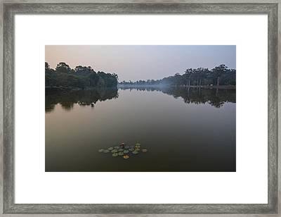 Water Lilies At Dawn Framed Print by Bill Mock