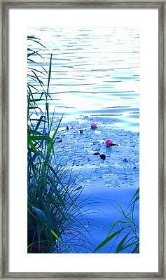 Water Lilies Blue Framed Print