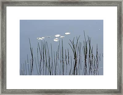 Water Lilies Framed Print by Carolyn Reinhart
