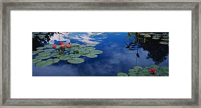Water Lilies In A Pond, Denver Botanic Framed Print