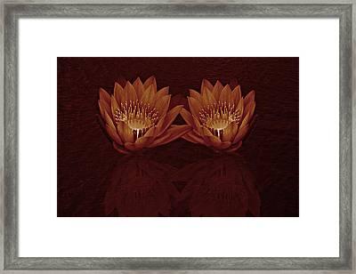 Water Lilies In Deep Sepia Framed Print