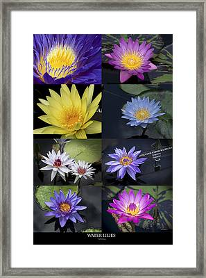 Water Lilies Framed Print by Phil Abrams