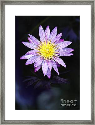 Water Lilies V Framed Print by Eyzen M Kim
