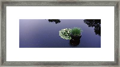 Water Lilies With A Potted Plant Framed Print by Panoramic Images